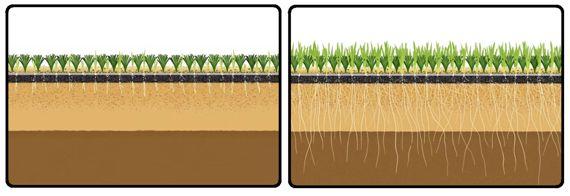 Figura 23 : Infografía de un tipo de césped híbrido. En este caso, el césped natural es sembrado sobre césped artificial.  (Fuente: Palau Turf)