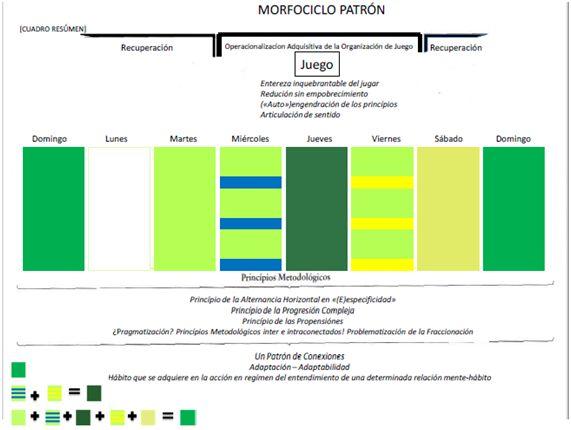 Morfociclo01